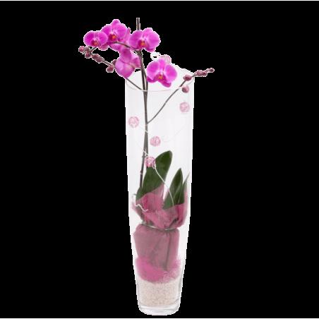 Phalenopsis Rose Verrerie