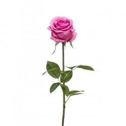 Rose Eternelle Rose Antique