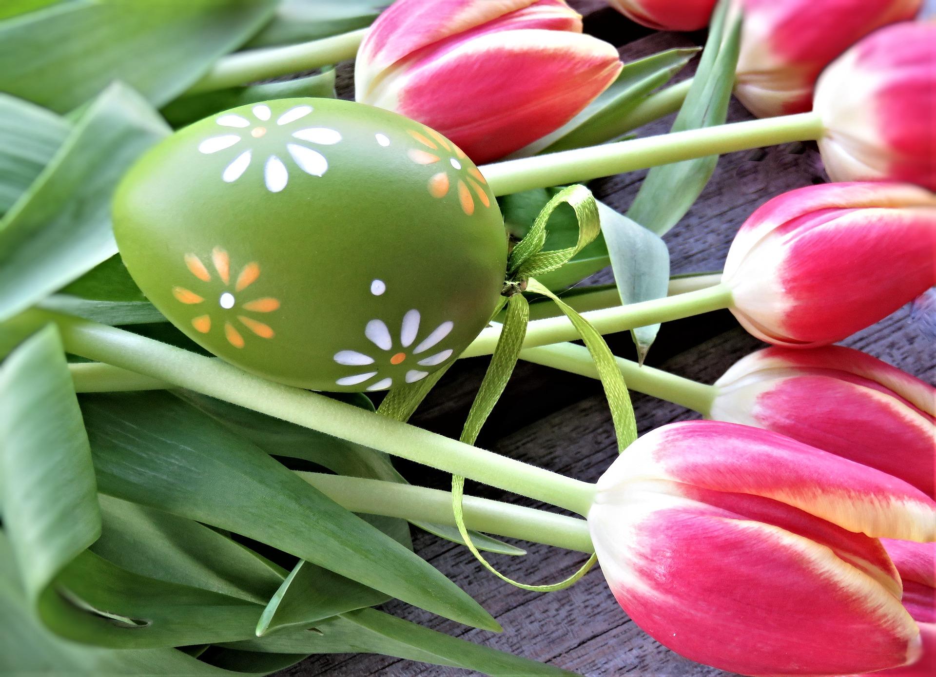 tulips-4103299_1920.jpg